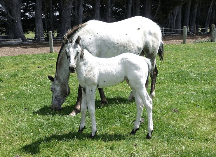 Mararoa Silver Star