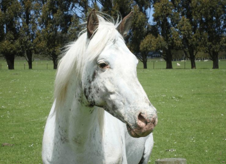 Mararoa Mighty Ghost